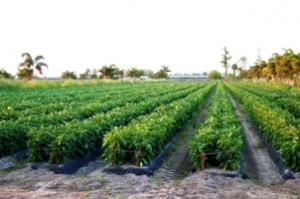 Part of the Agricultural Reserve (Credit: Boca Raton magazine)