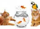 pic-for-catz1