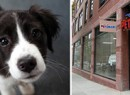 From left: a dog and a PetSmart on Atlantic Avenue in Boerum Hill