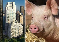 20140725_condo_versus_pork_feature