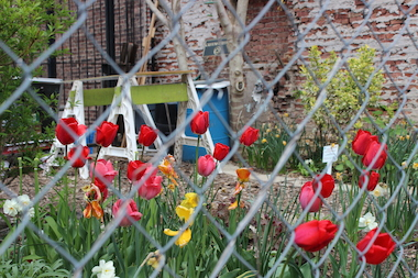 A community garden in Crown Heights