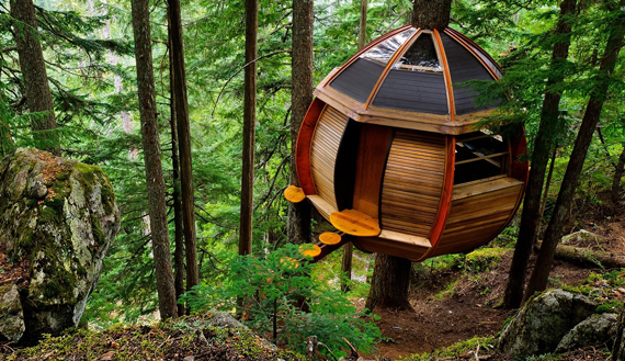 Tree houses for Houses built in trees