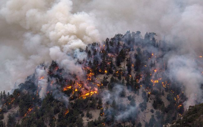 The Bobcat Fire (Credit: David McNew/Getty Images)