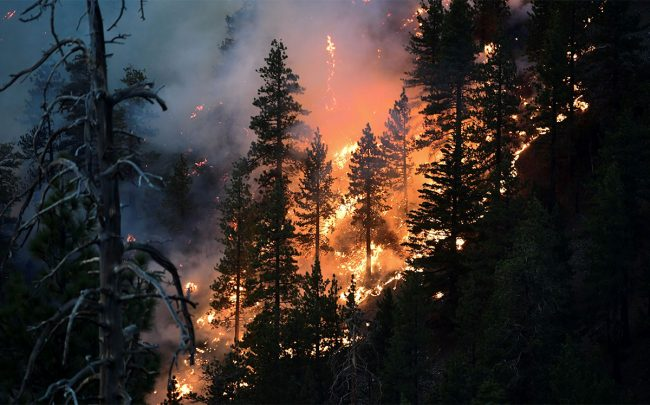 The Bobcat Fire burns pine trees on September 21, 2020 (Credit: FREDERIC J. BROWN/AFP via Getty Images)