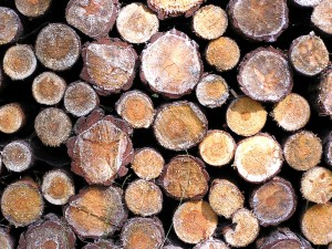 Florida pine sells for $25 a ton, up from $21 in 2011.