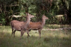 The 1,784-acre Red Stag Sanctuary