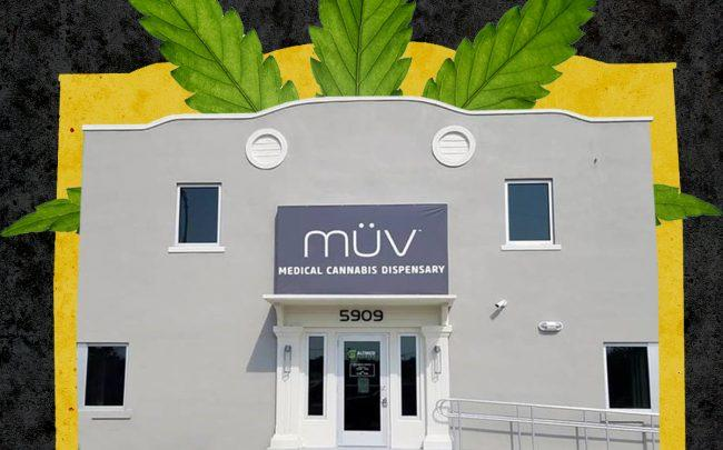 An Altmed Müv dispensary in Apollo Beach (Altmed, iStock)