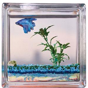 schwartz-fish