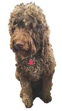 Will-Silverman-dog