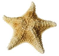 Susan-Breitenbach-shells