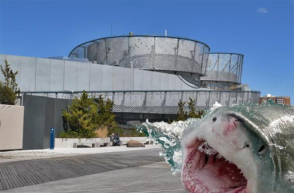sharkbuilding