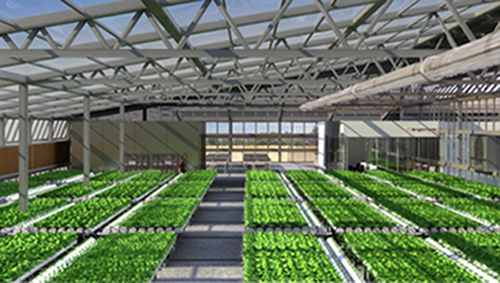 Brightfarms Plans Largest Hydroponic Greenhouse In Country